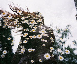 flowers, hipster, and photography image