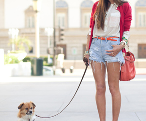 fashion, dog, and red image