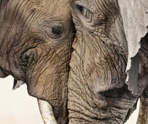 elephant and animal image