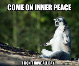 funny, animal, and peace image