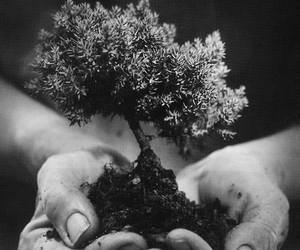 tree, nature, and hands image