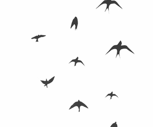 birds, background, and fly image
