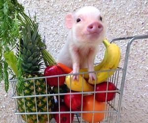 animal, food, and fruit image