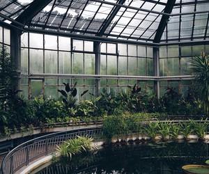 america, sky, and botanic image