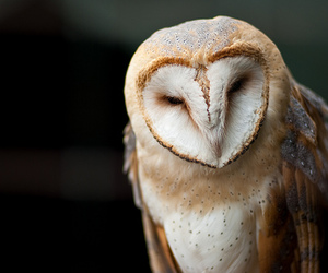 owl, photography, and animal image
