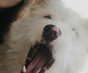 dog, selfie, and friend image