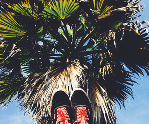 beautiful, palmtrees, and photography image