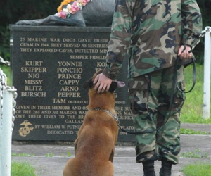 dog, military, and army image