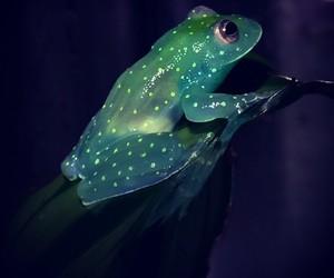 frog, nature, and animal image