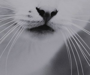 b&w, cat, and fluffy image