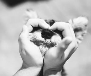 dog, heart, and eyebrows image