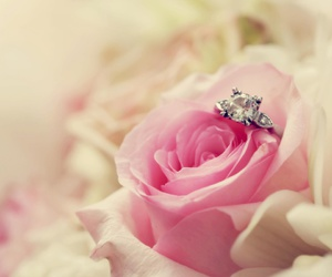 rose, ring, and pink image