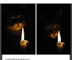 cats, fire, and funny image