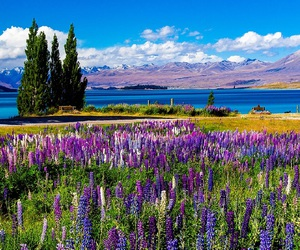 lake, nature, and plants image