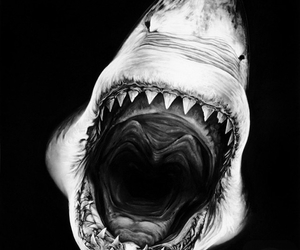 shark, black and white, and scary image