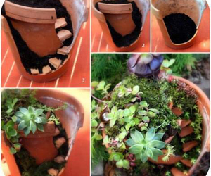 plants, diy, and flowers image