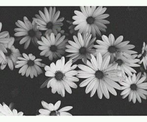flowers, black, and black and white image