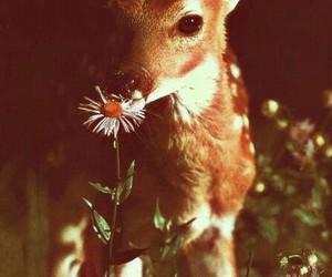 deer, animal, and flowers image