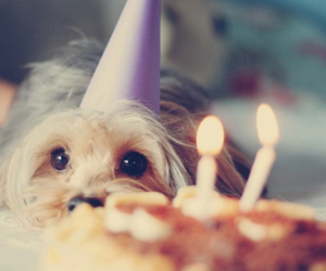 dog, cute, and birthday image