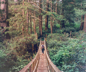 bridge, forest, and girl image