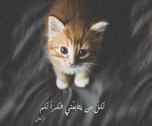 arab, baghdad, and cat image