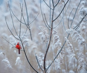 bird and winter image