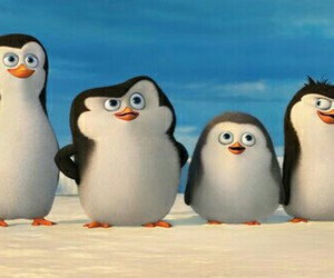 penguin, 5sos, and LUke image