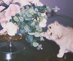 cat, roses, and vintage image