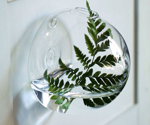 home decor plant image