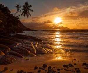 beach, palmtrees, and paradise image