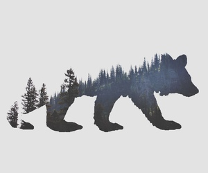 bear, tree, and forest image