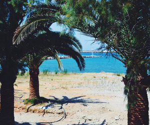 palms, sea, and sun image