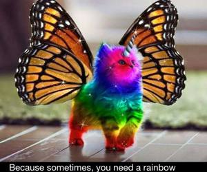 butterfly, rainbow, and unicorn image