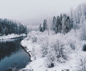 forest, winter, and lake image