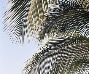 beach, holidays, and palm tree image