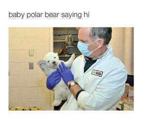hi, Polar Bear, and so cute image