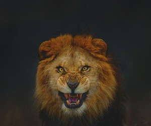lions, loves, and animals image
