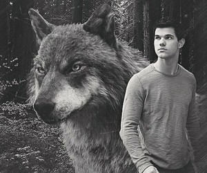 twilight, Taylor Lautner, and wolf image