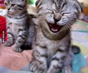 friends, cat, and laugh image