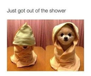 cute, puppy, and shower image
