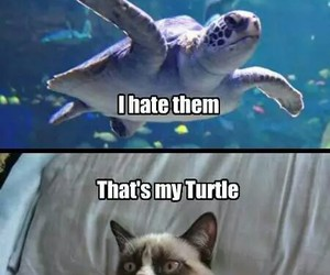 funny, turtle, and cat image