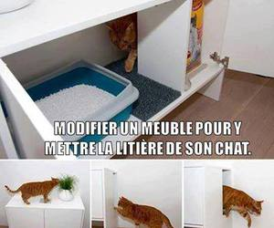 litter, cat, and ideas image