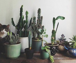 cactus, grunge, and indie image