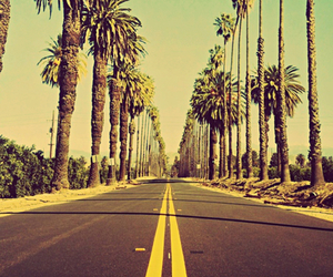 nature, palms, and road image