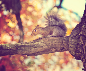 animal, fall, and squirrel image