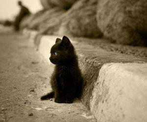 black cat, blue eyed cat, and blue eye image