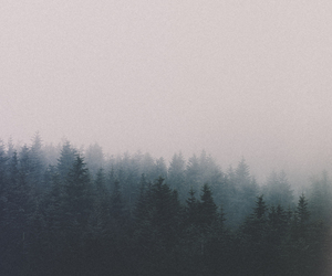 fog, forest, and nature image