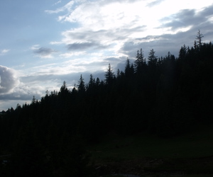 forest, travel, and transilvania image