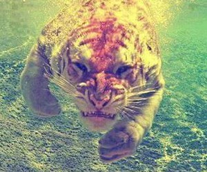 agua, tiger, and bajo el agua image