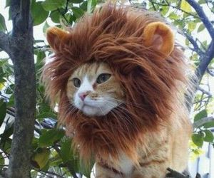 cat and lion costume image